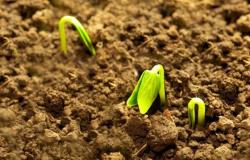 Sementeiros em MT esperam aumento de 10% na produção de sementes de soja para safra 17/18