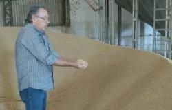 Colonizador crê na soja como nova força econômica em Alta Floresta