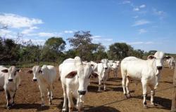 MT registra mais de 8 mil roubos e furtos em propriedades rurais; suspeitos miram animais e defensivos