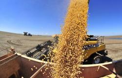Safra de grãos é recorde em MT, mas com qualidade comprometida