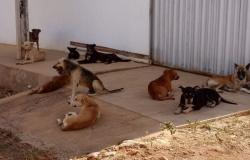 Cresce população de animais nas ruas de Alta Floresta