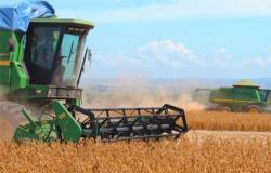 Região de Alta Floresta produz mais de 25 mil hectares de soja na safra 16/17