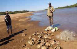 Duas pessoas foram presas em MT com 104 tartarugas e 15 kg de pescado ilegal