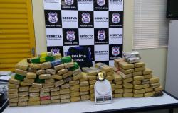 Polícia Civil apreende 200 quilos de maconha em casa da Capital
