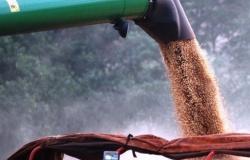 Mato Grosso responde por 25,9% da produção de grãos no país