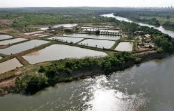 Produção de peixe tem grande potencial no Brasil: MT é o quarto maior produtor