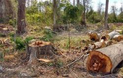 MT reduz 10% o desmatamento em 12 meses