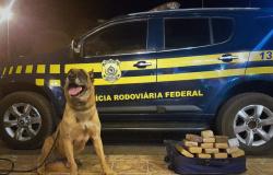 PRF apreende cerca de 20kg de droga em ônibus de Alta Floresta a Recife-PE.