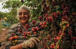 Mato Grosso terá incremento de R$ 6 milhões para aumentar produção de café