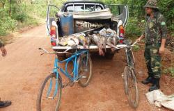 Fiscalização apreende 62 kg de pescado irregular