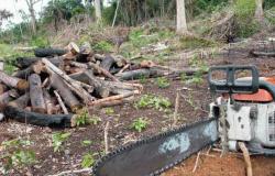 Paranaita entra no ranking dos 10 municípios críticos em desmatamento