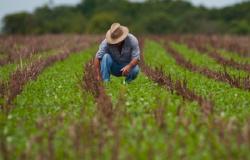 Aprovado parcelamento de débitos de produtores rurais
