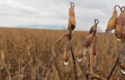 Chuva prejudica colheita de soja em município de MT