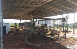 SEMA embarga empresa especializada em exportação de teca recém inaugurada em Alta Floresta