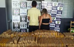 Polícias Civil e Militar apreendem mais de 250 quilos de maconha em Jaciara