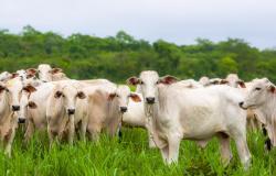 Mato Grosso implanta selo de origem da carne