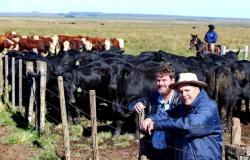 Pecuarista de Alta Floresta cruza nelore com touro angu e passa a exportar para o Irã