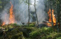 Mato Grosso libera ranking de queimadas