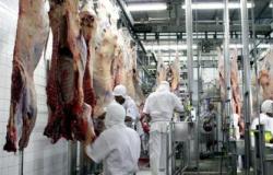 Abate de gado em mato grosso cresce 37% e é melhor resultado em um ano