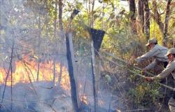 MT lidera ranking no país e registra quase 9 mil focos de queimadas de janeiro a agosto