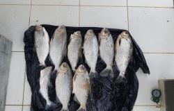 Paranaita: Sema faz flagrante de pesca na Piracema e intensifica fiscalização