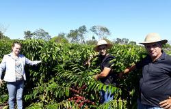 Cafeicultores de Nova Bandeirantes recebem orientação sobre controle de pragas e doenças