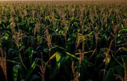 Governo mantém taxação do agronegócio e espera arrecadar R$ 1,46 bilhão
