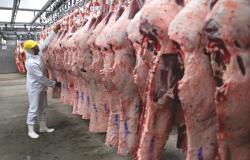 Mato Grosso registra melhor índice de utilização da capacidade de abate em dez anos