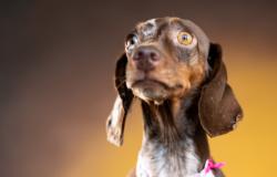 Professores e alunos criam 'book' de cães e gatos para ajudar na adoção; conheça detalhes