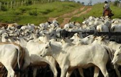 Sindicato Rural de Alta Floresta destaca a integração da lavoura-pecuária na produtividade de carne