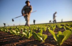 Sindicatos rurais cobram mais segurança no campo em MT