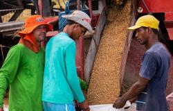 Estimativa para safra de grãos sobe e chega a 231,5 milhões de toneladas