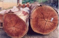 Projeto que transfere classificação da madeira para Sema é aprovado na Assembleia