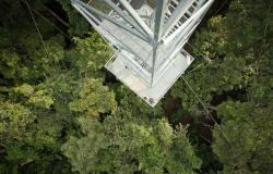 Turistas podem observar pássaros em torres de 50 metros no Rio Cristalino, em Alta Floresta