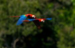 Amazônia mato-grossense: Pecuária e agricultura dialogam com o turismo verde