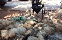 Sema realizou operação em Paranaíta, Colíder e mais 4 cidades do nortão contra pesca predatória