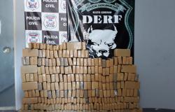 Polícia Civil apreende 500 kg de maconha com duas adolescentes em Rondonópolis