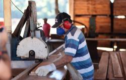 Cipem e Sebrae-MT oferecem consultorias gratuitas sobre gestão de estoque e eficiência energética para setor florestal
