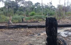 """Seis são presos durante """"Operação Amazônia"""" Em Nova Bandeirantes"""