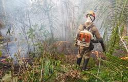 Colniza é o 8º município no país com maior número de queimadas, diz Inpe