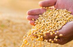 MT é responsável por mais da metade da renda gerada com a produção agrícola no Centro-Oeste, diz IBGE