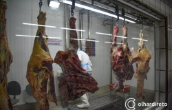 Com novos frigoríficos habilitados para exportação, preço da carne pode aumentar, aponta economista