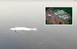 Sema notifica usina por morte dos peixes no rio Teles Pires