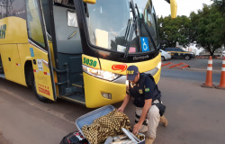 PRF apreende adolescente transportando 13 kg de maconha escondida na mala