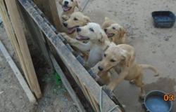 Polícia Civil e Vigilância Sanitária fazem resgate de animais em Alta Floresta