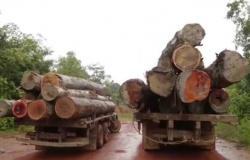 Exploração ilegal de madeira se concentra em imóveis rurais privados em MT
