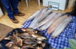 Sema apreende 108 kg de peixes e apetrechos proibidos no Norte  de MT