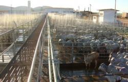 Guarantã do Norte: Frigorífico Redentor se salva com recebíveis da China e volta a pagar produtores