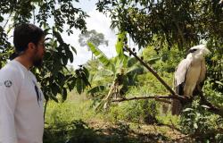 Professor da UNEMAT de Alta Floresta resgata filhote de harpia em Colniza; Veja o vídeo