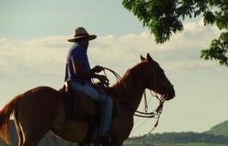 COLÍDER: Fazenda é condenada a pagar pensão a trabalhador que ficou tetraplégico após cair de mula